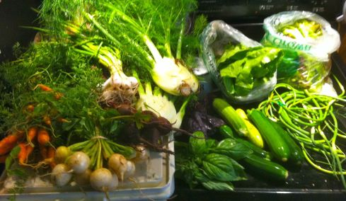 The box was bountiful this week. Carrots, turnips, beets, fennel, zucchini, garlic scrapes. romaine lettuce, mixed greens, eggs