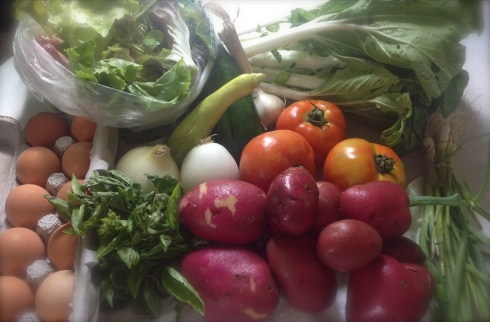 "Our box came bursting with: Spring mix, Garlic, squash, tomatoes, basil, sweet onions, and red potatoes. (There were ""pardon peppers"" too, but I swapped those out for more potatoes. --Another great thing about our CSA is the flexibility.)"