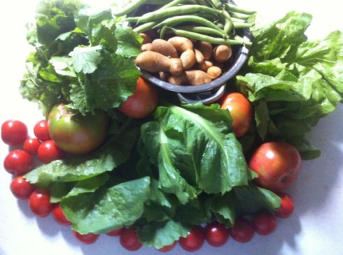 This week's CSA box from Calverts Gift included: Green beans, tomatoes, french  fingerling potatoes, sweet peppers, escarole, head lettuce, cherry tomatoes, rapini. I also picked up some purple sage from the extras box