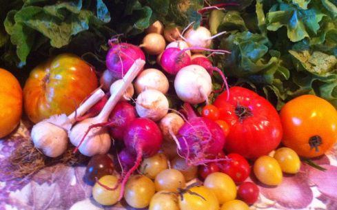 escarole Tomatoes cherry tomatoes garlic turnips Napa cabbage Bok Choi Jalepenos