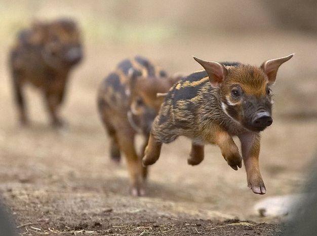R Hogs Random blog abo...