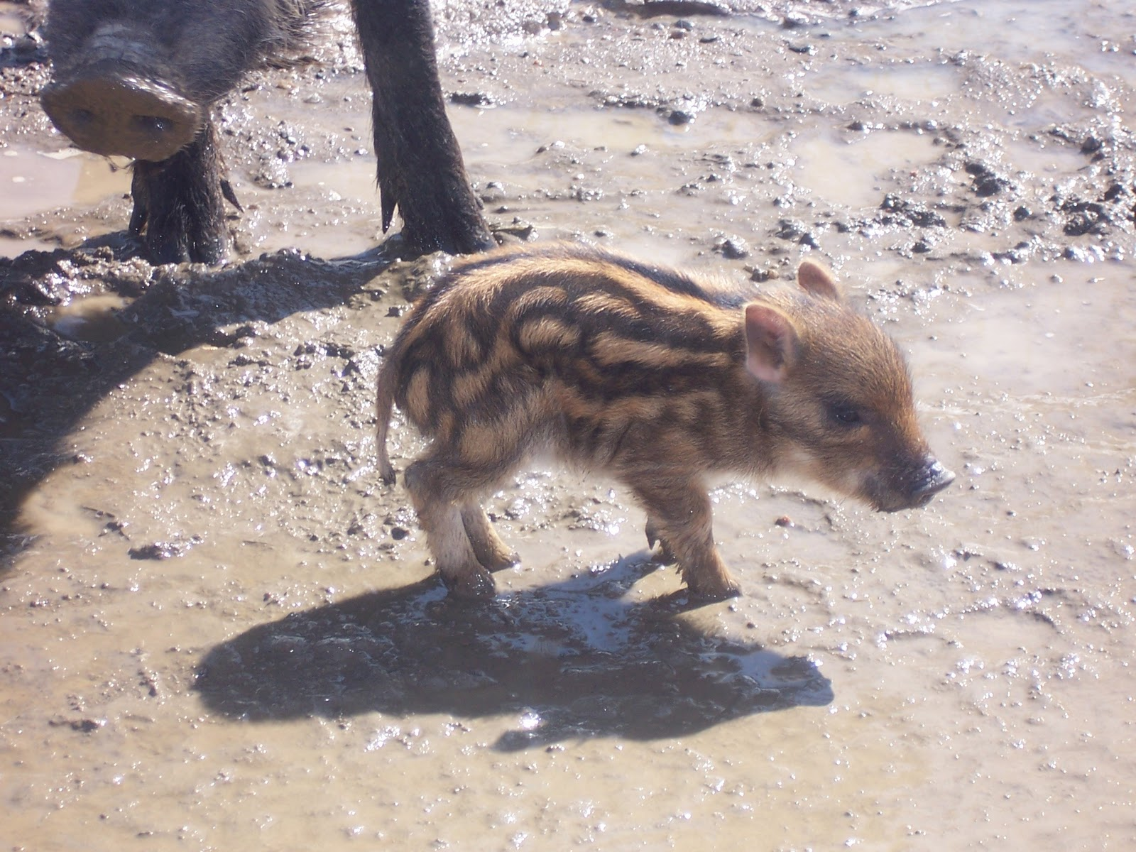 Random Blog About Baby Boars Ritalovestowrite