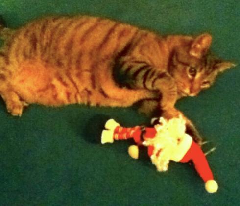 Cat&Elf